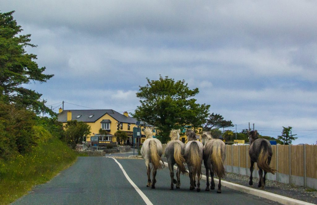 Horse trekking is another fun way to enjoy nature and the outdoors in Ireland.