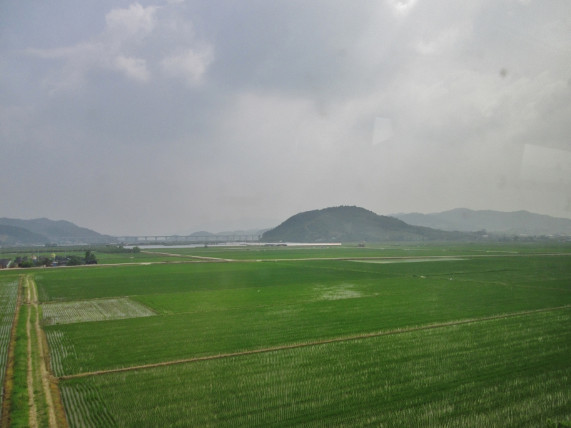 Rice fields with a mountain in the background at Daecheon Beach in Korea