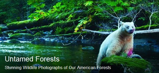 Untamed Forests of the Americas