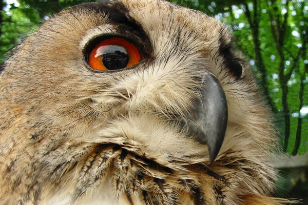 The wise owl eyes beaming down upon us all